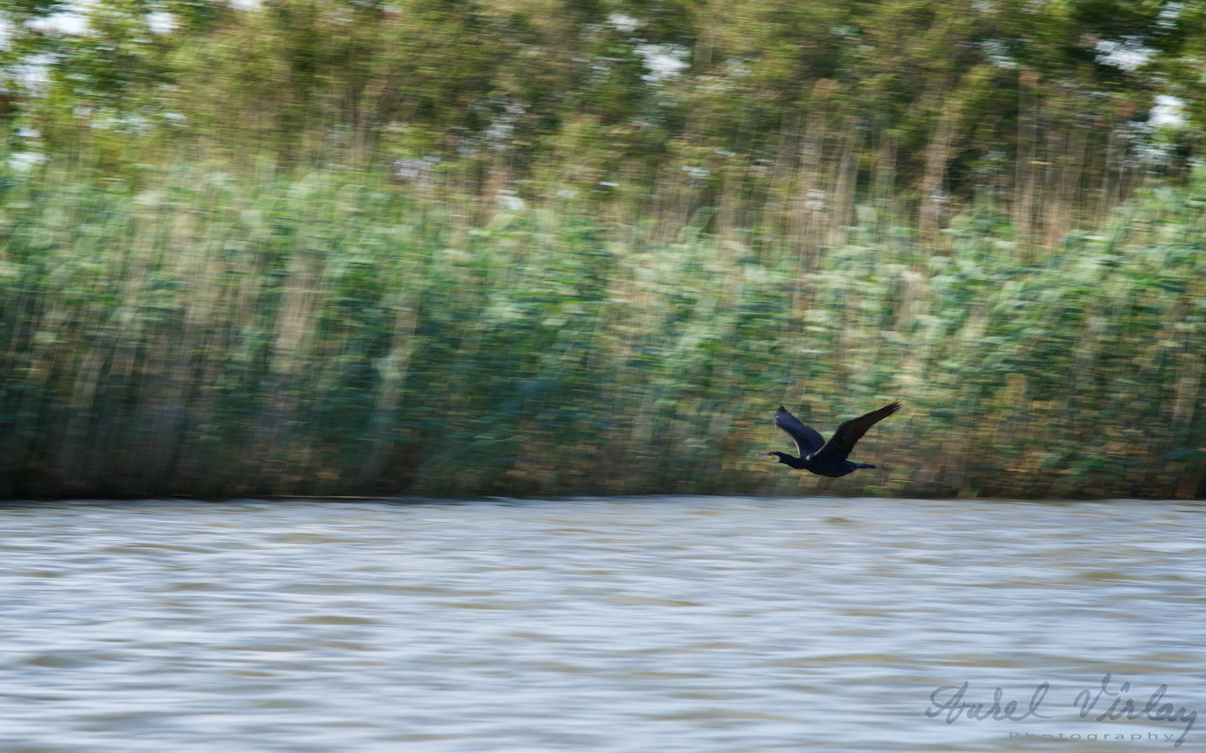 Our boat speed reached 70 km / h, and this bird cormorant had been overtook us and cut our way through the front of the boat!
