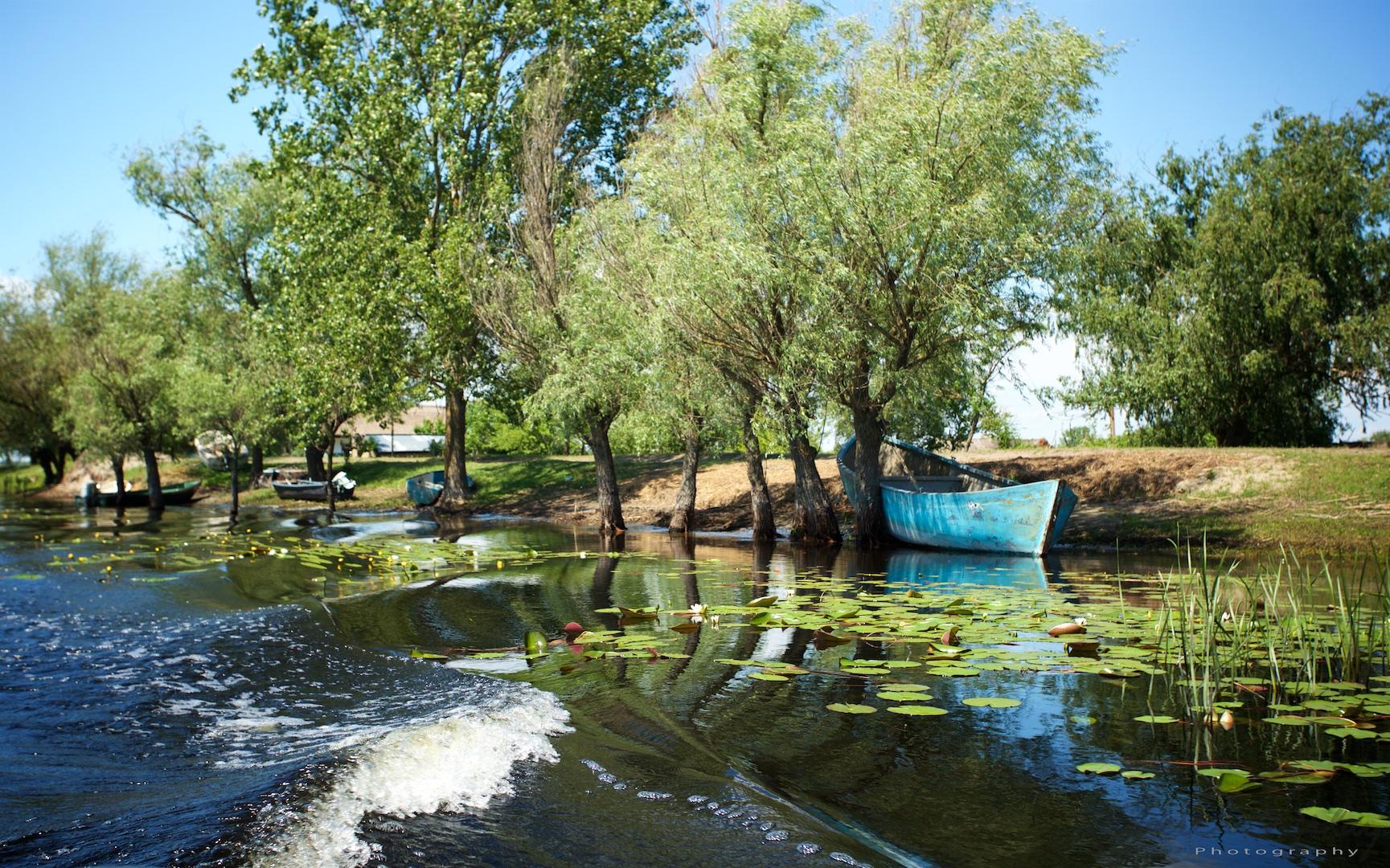 Common landscape in the Danube Delta