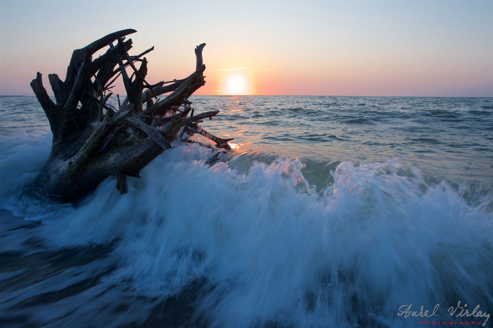 Roots of a tree brought to shore by the waves of the sea.