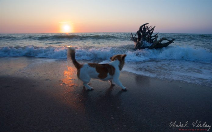 Landscape Photography of Sunrise with a puppy and roots in Vama Veche.