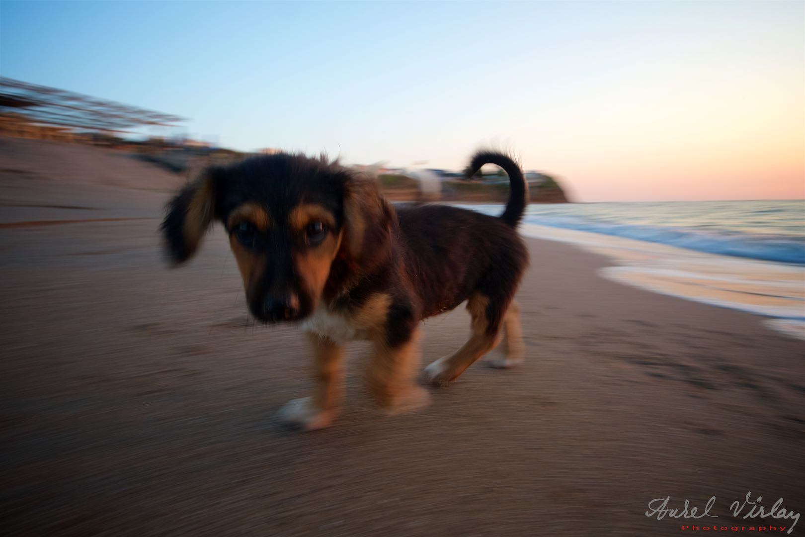 Curiosity between a doggy and a photographer.