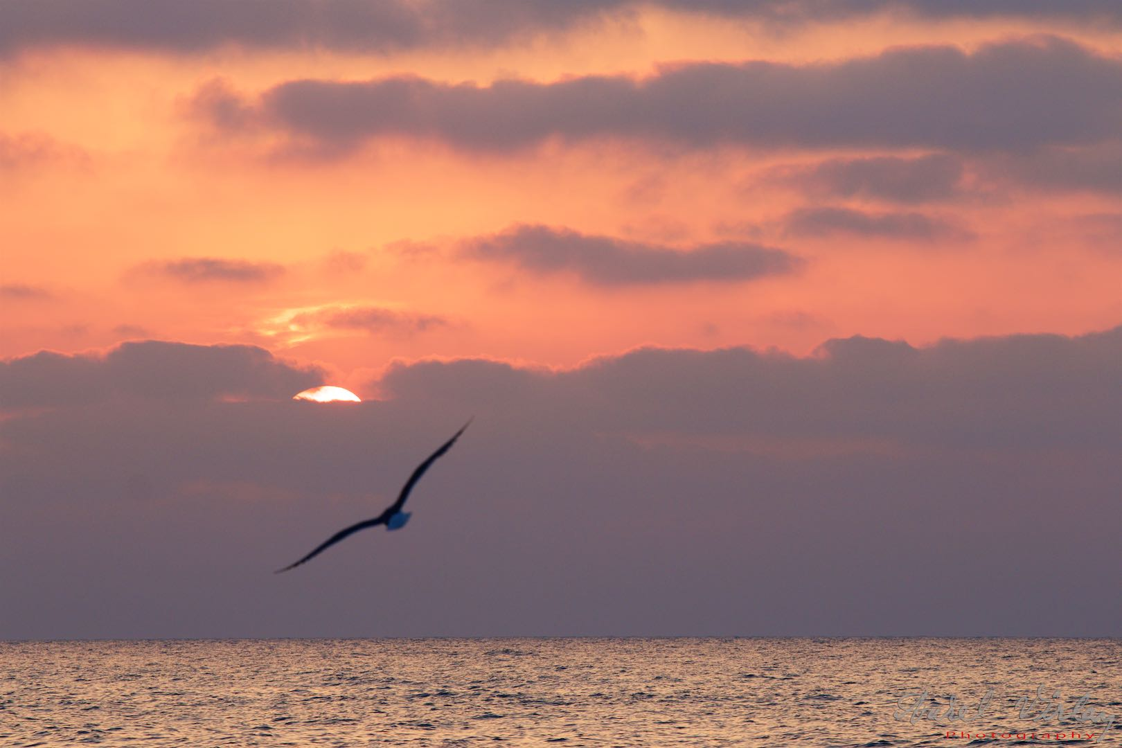 Seagull flying to the Sun.